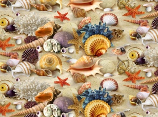 Texture, shells, sand, corals, theme, summer, positive