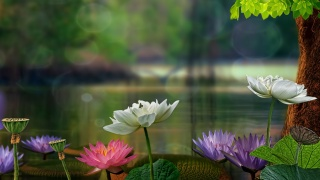 lotuses, lilies, photoshop, nature, macro, the pond, summer, 3d, 3D, flowers, beautiful