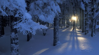 зима, сніг, ліс, дерева, гілки, сонце, сяйво, світло