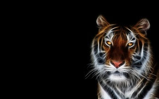 tiger, art, photoshop, the dark background, 3d, 3D, predator, fantasy