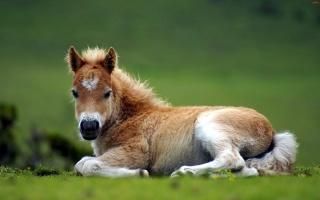 кінь, лоша, природа, трава