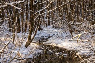 зима, ліс, вода, лід, холод, контраст, сонце