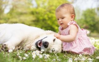 ребёнок, девочка, малышка, собака, дружба, фото, позитив, природа, цветы, супер