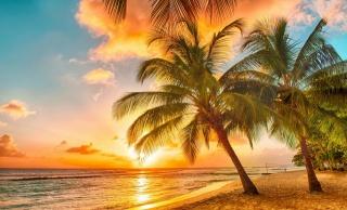 příroda, léto, v tropech, palmové, pláž, oceán, nebe, západ slunce, krásně, příroda, letní, palm stromy, pláž, oceán, sky, západ slunce