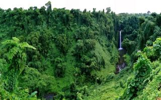 v tropech, příroda, vodopád, džungle, palmové, stromy, zelené pozadí
