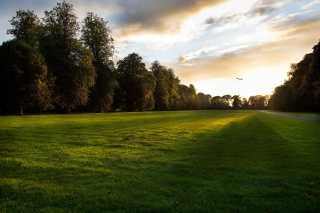 nature, Park, trees, road, the sky, sunset, lawn, clouds, light, the sun, birds