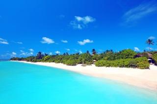 nature, The Maldives, tropics, resort, the beach, palm trees, the ocean, sand, summer