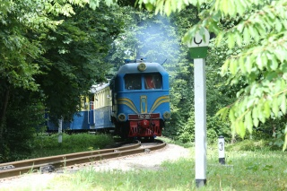 train, forest