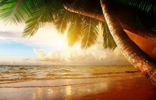 pláž, pobřeží, moře, oceán, palm, letní, léto, palmové, pláž, nebe, západ slunce, zataženo, mraky