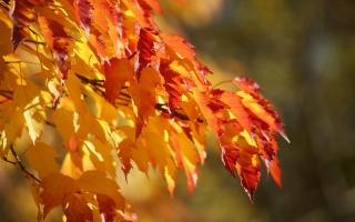 листья, осень, макро
