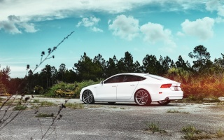 audi a7, car, photo, Parking, forest, photo, drives, Audi, white