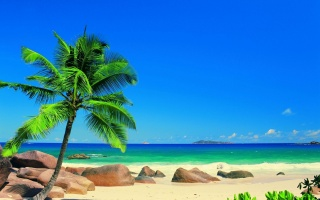summer, the ocean, the rest, the sun, palm trees, exotic
