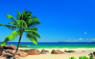 léto, oceán, dovolená, slunce, palmové, exotika