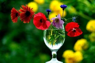 композиція шик, натюрморт, квіти, Келих, краса