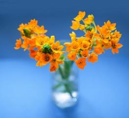 композиція шик, натюрморт, квіти, ваза, краса