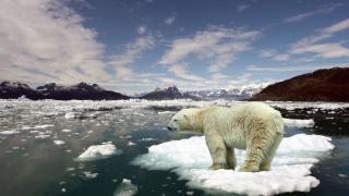 крижини, гори, океан, океан, білий ведмідь, Полярний ведмідь, крижина, гори