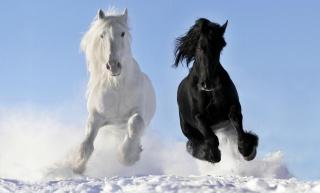 коні, зима