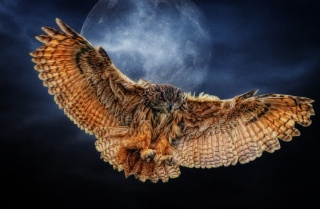 Сова, природа, політ, крила, фон, місяць, ніч