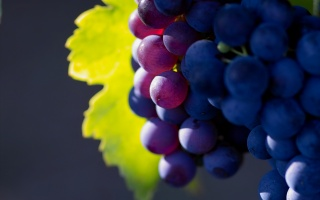 grapes, berries, the bunch, leaf green