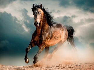 кінь, кінь, мустанг, пісок, галоп, небо, хмари
