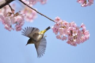 spring, nature, tree, branch, flowers, bird, flight, macro, photo