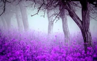 весна, ранок, туман, квіти, дерева, фіолет