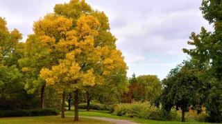 парк, дорожка, деревья, небо, листья, красота