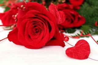 роза, квіти, серце, Любов, білий фон, бусинка, макро