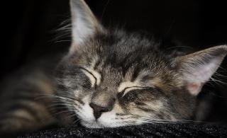 кішка, сон, макро, фото, позитив, темний фон