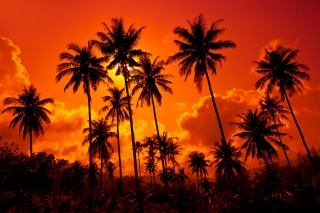 summer, palm trees, nature