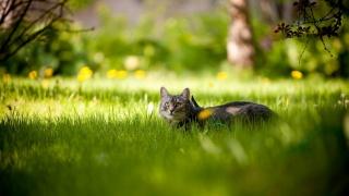 кіт, трава, дерево, зелень, морда, очі, вуха, краса, гілки, сонце