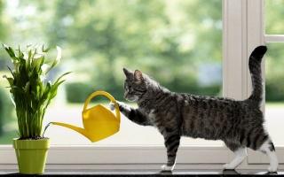 kočka, okenní parapet, лейка, humor