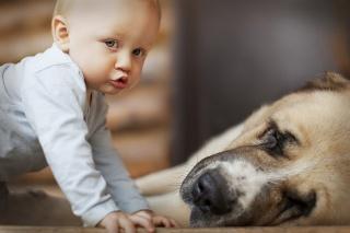 дитина, хлопчик, собака, сон, дружба, макро фото