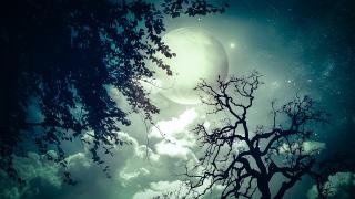 ніч, фотошоп, місяць, зірки, хмари, дерева, гілки