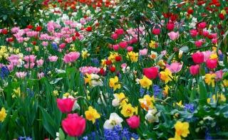 цветы, весна, поляна, парк