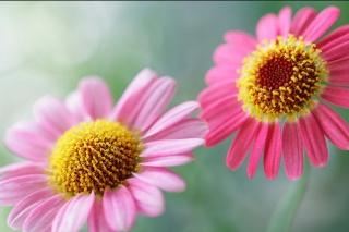 цветы, красота, цветок, фон, лепесток