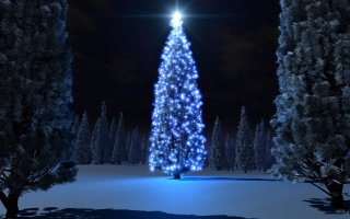 tree, christmas, light, night, snow