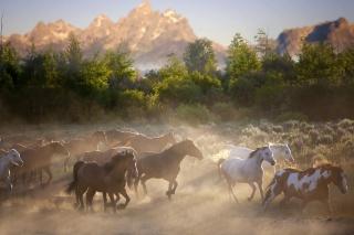 koně, koně, stádo, příroda