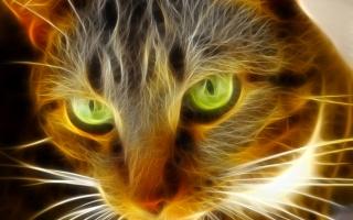 kočka, kočka, oči, Zvíře