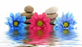 цветы, камни, вода, отражение