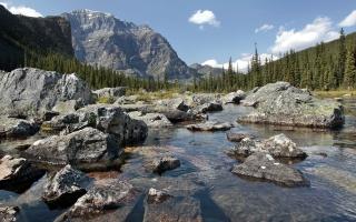 kameny, balvany, jezero, les, skály