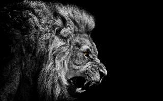 лев, фон, чорний, фотошоп, очі