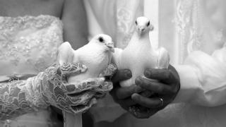 holub, holubi, чорно-белий, svatba