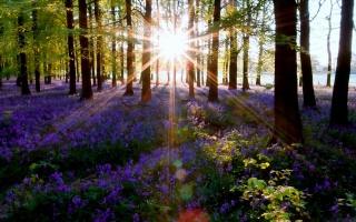 příroda, slunce, stromy, květiny