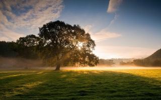 příroda, slunce, svítání, strom, mlha, les, nebe