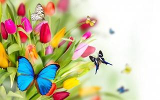 kytice, tulipány, motýli