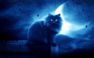 кот, ночь, луна, облака, черный