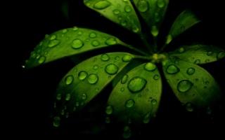 příroda, list, rosa, voda, černá, zelená