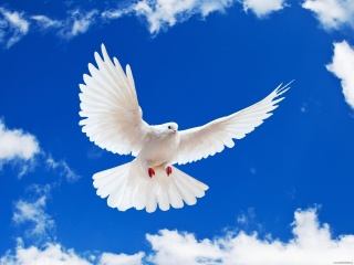 dove, the sky, clouds