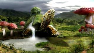 черепаха, гриби, озеро, гори, хмари